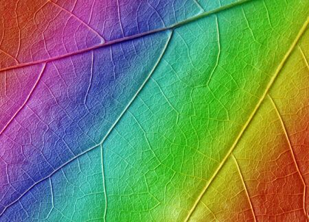 multicolored leaf texture as background