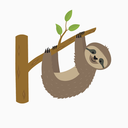 Photo for Sloth hanging on tree branch . Cute cartoon character. Wild jungle animal collection. Baby education. Isolated. White background. Flat design Vector illustration - Royalty Free Image