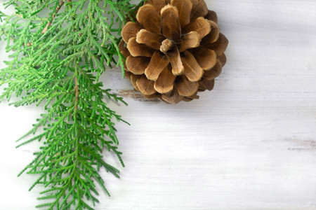 Photo for Green spruce branch with pine cone on white background. Copy space - Royalty Free Image