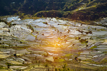 Terraced Rice Fields Scenery in Spring Water Season in South China