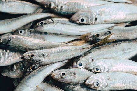 Photo pour Fresh fish in market on dark background - image libre de droit