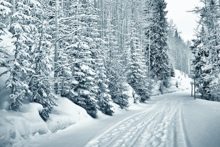 ski and foot prints trought the snowy forest in vail, colorado