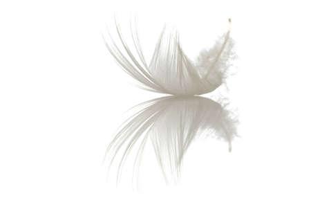 single feather on white