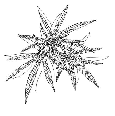 Illustration pour Vector Decorative illustration of big branch hemp on white background - image libre de droit