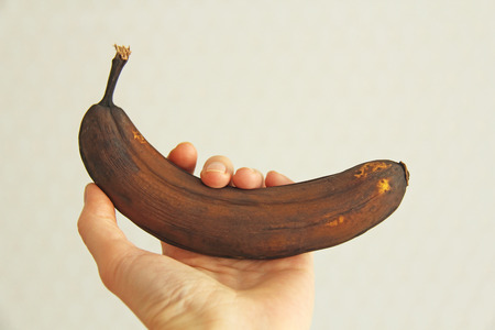 Photo for Black spoiled banana in hand. A hand is holding a rotten black or brown banana fruit. A rotten banana. Single spoiled black banana. Copy space for your text. Trendy spoiled organic fruits - Image. - Royalty Free Image