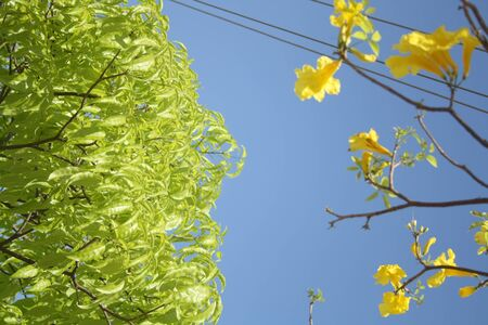 green leafs and yellow flowers