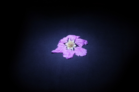 light on a pink flower