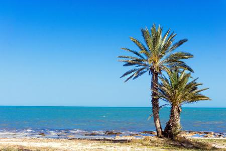 Photo pour Beautiful landscape of the Mediterranean sea with palm trees in Djerba, Tunisia - image libre de droit