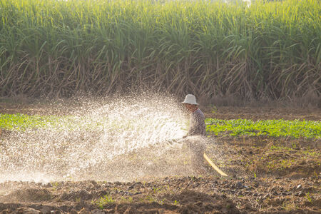 Farmer watering vegetable in suphanburi , Thailand countryside