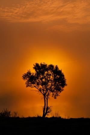 Photo pour Wonderful autumn forest at sunset. Sun. Tree - image libre de droit