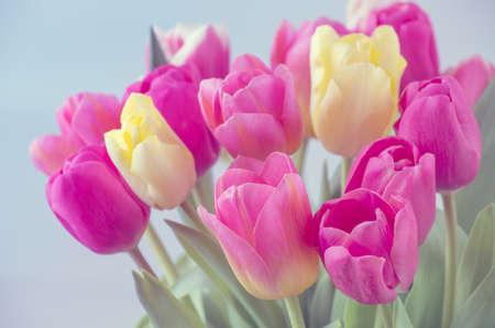 Photo pour Mix of tulips flowers - image libre de droit