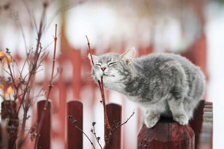 Photo pour sweet tabby cat fondled on a branch in spring on a fence  - image libre de droit