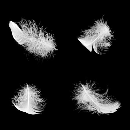 a set of white fluffy feathers in different angles on a black isolated background