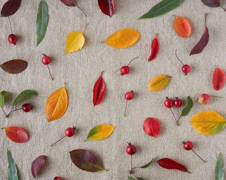Foto de Autumn background of berries, small wild apples, acorns and leaves o gray linen textile background. Pattern of natural elements - Imagen libre de derechos