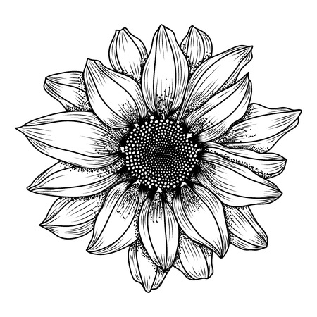 Illustration pour Vector hand-drawn image of daisy or chrysanthemum flower, ink style. EPS 10 - image libre de droit