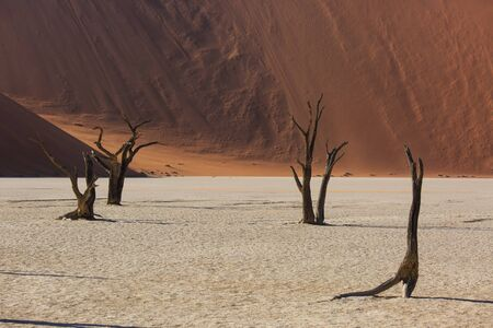 Photo for Silhouettes of dry hundred years old trees in the desert among red sand dunes. Unusual surreal alien landscape with dead skeletons trees. Deadvlei, Namib-Naukluft National Park, Namibia. Namib desert - Royalty Free Image