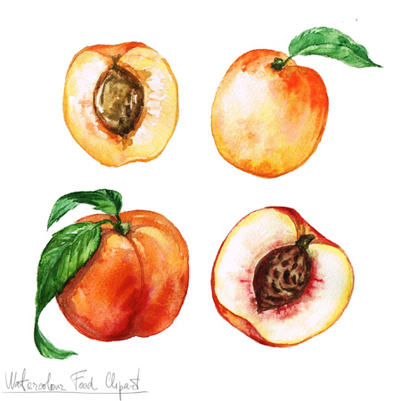 Watercolor Food Clipart - Apricot and Peach