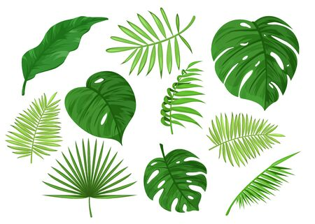 Illustration pour Tropical carved and solid apart leaves cartoon vector illustration set isolated on white background. Collection of light, dark green exotic items. Wallpaper, wall art, banner, poster, decoration - image libre de droit