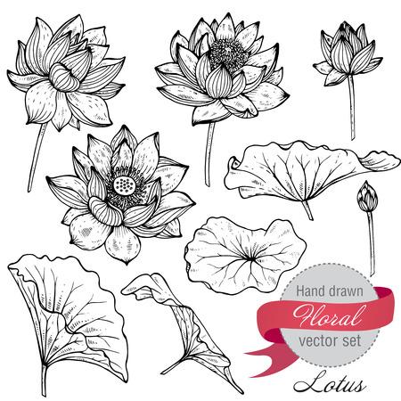 Ilustración de Vector set of hand drawn lotus flowers and leaves. Sketch floral botany collection in graphic black and white style - Imagen libre de derechos