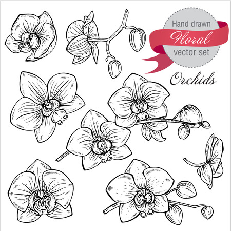 Illustration pour Vector set of hand drawn orchid branches with flowers. Sketch floral botany collection in graphic black and white style - image libre de droit