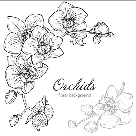 Illustration pour Beautiful monochrome vector floral background with orchid branches with flowers in graphic style. - image libre de droit