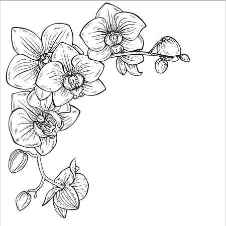 Illustration pour Beautiful monochrome floral background with orchid branches with flowers in graphic style. - image libre de droit