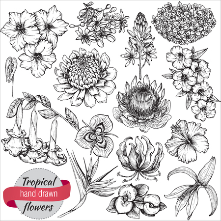 Illustration pour A vector collection of hand drawn tropical flowers, palm leaves, jungle plants. Black and white exotic floral illustration. Isolated objects - image libre de droit