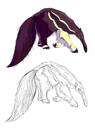 Illustration pour Fantasy illustration of cute fairyland anteater. Colorful and black and white pattern for coloring. Worksheet for children and adults. Vector cartoon image. - image libre de droit