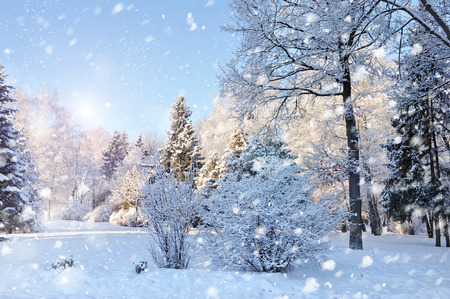 Photo for Beautiful winter landscape - Royalty Free Image