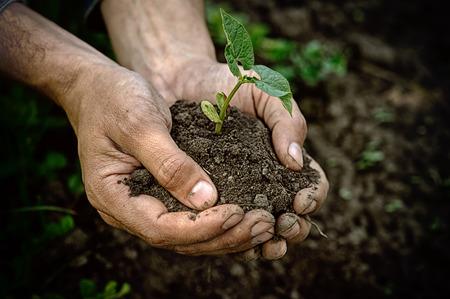 Photo pour Hands holding young plant with soil - image libre de droit