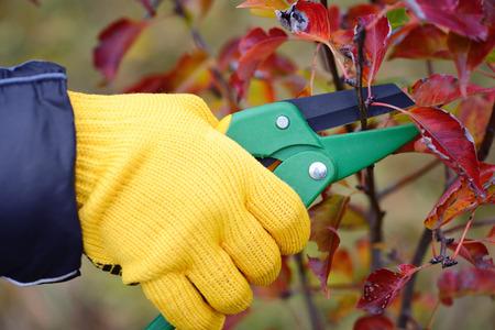 Foto für Hands with gloves of gardener doing maintenance work, pruning trees in autumn - Lizenzfreies Bild