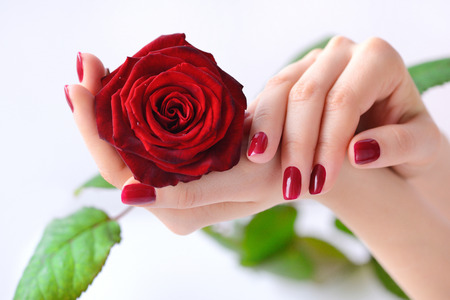 Photo pour Hands of a woman with red manicure with red rose on white background - image libre de droit