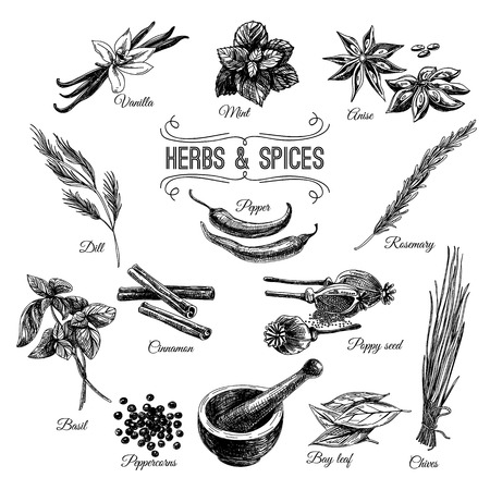 Illustration for Vector hand drawn set with Herbs Spices. Vintage illustration. Retro collection. - Royalty Free Image