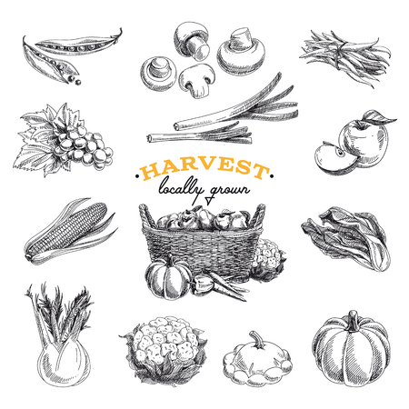 Illustration pour Vector hand drawn sketch Harvest set. Eco foods.Vector illustration. - image libre de droit
