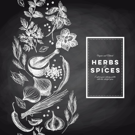 Illustration pour Vector background with hand drawn herbs and spices. Organic and fresh spices illustration. Chalkboard. Border.Repeating background. - image libre de droit