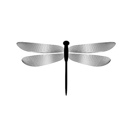 Ilustración de Black and white elegant dragonfly insect, vector - Imagen libre de derechos