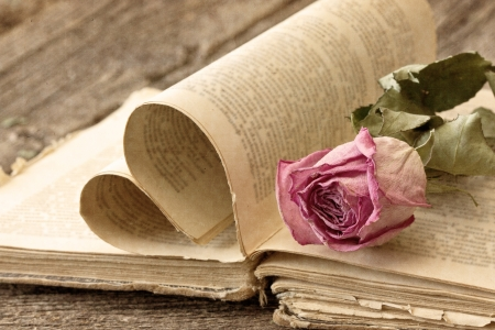 Dry rose on an old book in a vintage style