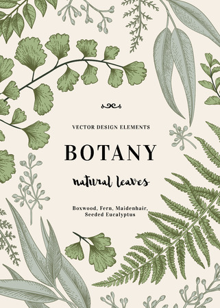Illustration pour Floral background. Vintage invitation with various leaves. Botanical illustration. Fern, seeded eucalyptus, maidenhair. Engraving style. Design elements. - image libre de droit