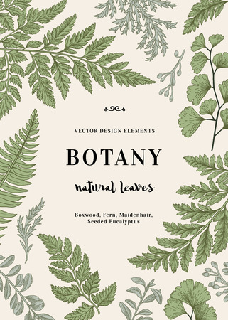 Botanical illustration with leaves. Boxwood, seeded eucalyptus, fern, maidenhair. Engraving style. Design elements. Black and white.