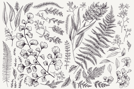 Illustration for Set with leaves. Botanical illustration. Fern, eucalyptus, boxwood. Vintage floral background. Vector design elements. Isolated. Black and white. - Royalty Free Image