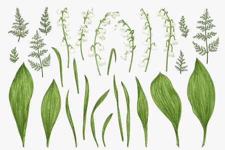 Illustration pour Spring flowers and herbs. Botanical illustration. - image libre de droit