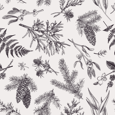Illustration for Christmas seamless pattern in engraving style. Vintage. Botanical background with coniferous plants, ferns and berries. Vector illustration. Black and white. - Royalty Free Image