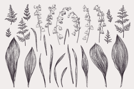 Illustration pour Set with lily of the valley. Black and white. - image libre de droit