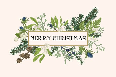 Illustration pour Christmas frame with winter plants. Botanical illustration. Composition with spruce, eucalyptus seeds, fern, juniper, mistletoe, larch cones, bluehead. Vector holiday card. - image libre de droit