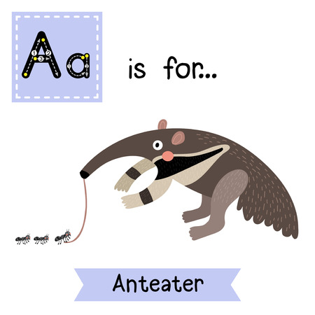 Illustration pour A letter tracing. Anteater. Cute children zoo alphabet flash card. Funny cartoon animal. Kids abc education. Learning English vocabulary. Vector illustration. - image libre de droit