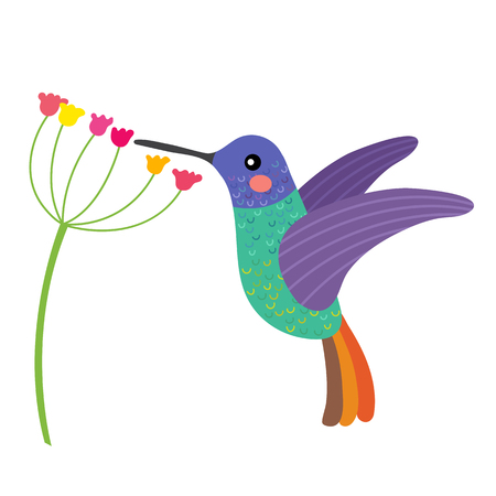 Illustration pour Golden tailed sapphire Hummingbird getting nectar from a flower animal cartoon character. Isolated on white background. illustration. - image libre de droit