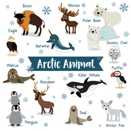 Arctic Animal cartoon on white background with animal name. Penguin, Polar Bear, Reindeer. Walrus. Moose. Snowy Owl. Arctic Fox. Eagle. Killer whale. Bison. Seal. Puffin. Narwhal.   illustration.