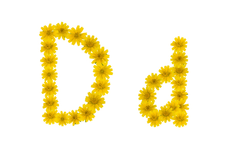 Letter D, alphabet made from yellow Wedelia flowers isolated on white background