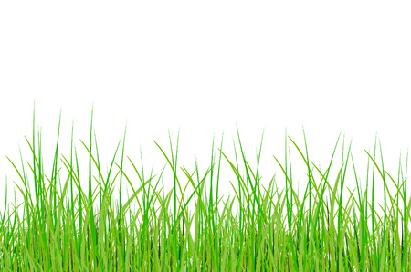 grass in vectorのイラスト素材