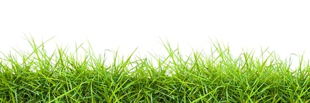 Photo pour Extra large horizontal strip of grass on white background. - image libre de droit